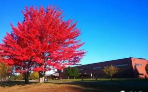 自由意志及其培养–加拿大小学教育漫谈
